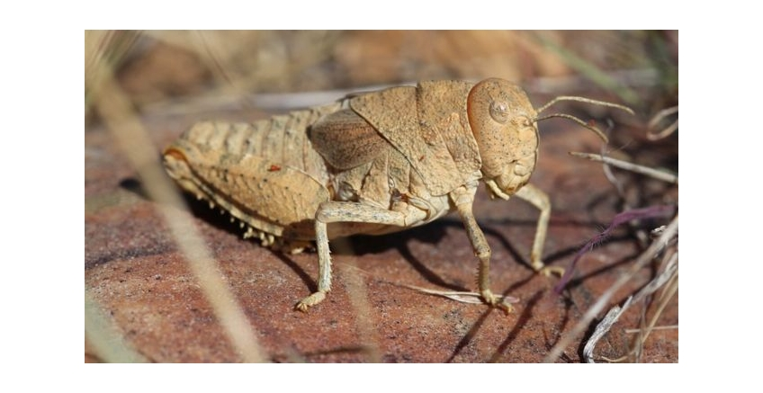 Sound of crickets 'could become'
